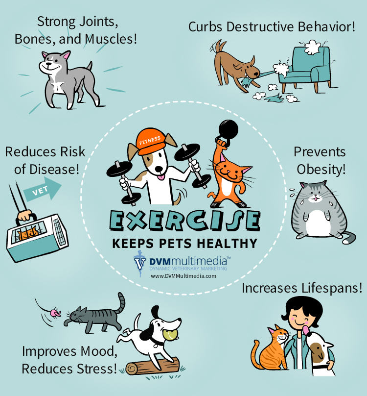 Pets Exercise Tips